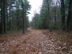 What I did this weekend on the Adirondack Coast…….. Wickham Marsh