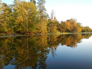 The color of the trees and the mirror-like water.