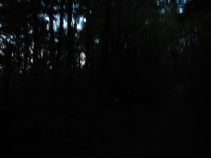 The only glimpse I captured of the fireflies. Wishing I had a more suitable camera.