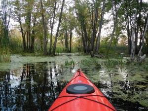 The marshland around Scomotion Creek.