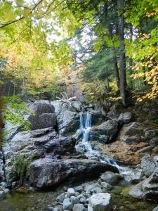 Gil Brook trail